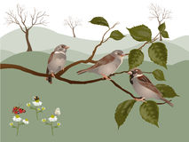 Scenery with sparrows Stock Photos