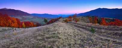 Scenery of the sunrise at the high mountains. Magic autumn landscape. Valleys with forests. Birch with orange leaves and golden grass. Touristic concept royalty free stock photography