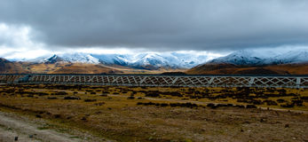 Scenery in Tibet Royalty Free Stock Photography