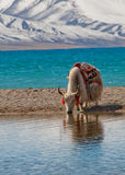 Scenery in Tibet. Scenery of mountains and lakes in Tibet Royalty Free Stock Image