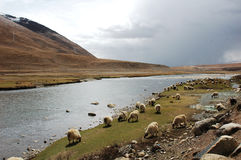 Scenery in Tibet Stock Photography
