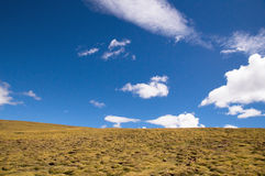 The scenery of Tibetan plateau Royalty Free Stock Photos