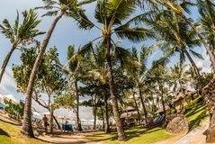 A scenery of a tropical beach with a lot of palms, high as skysc royalty free stock photos
