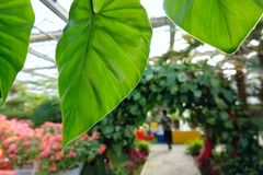 Arboretum. The scenery of tropical botanical garden in glass greenhouse Stock Image