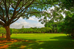 The scenery under big tree Royalty Free Stock Photo
