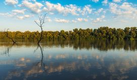 Danube Delta Vegetation and wildlife. Scenery from the wilderness of Danube Delta, blue sky, vegetation and wildlife, raw nature royalty free stock photography