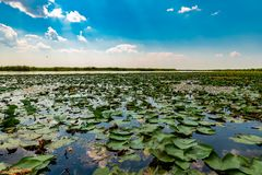 Danube Delta Vegetation and wildlife. Scenery from the wilderness of Danube Delta, blue sky, vegetation and wildlife, raw nature royalty free stock photo