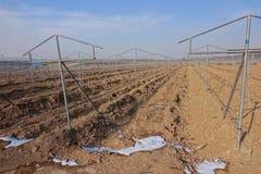 Winter farmland. The scenery of winter farmland of grape planting Stock Photography