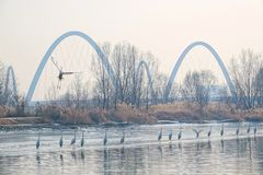 Scenery of winter river royalty free stock photography