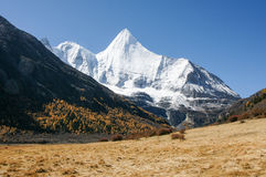Scenery of Yading in Daocheng county, Sichuan of China. Autumn Landscape Royalty Free Stock Image
