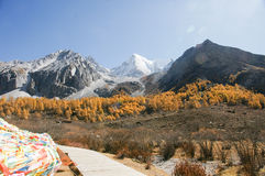 Scenery of Yading in Daocheng county, Sichuan of China Royalty Free Stock Photo