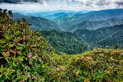 Scenes along appalachian trail in great smoky  mountains Stock Photos