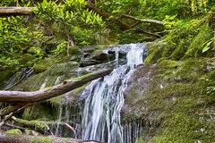 Scenes along appalachian trail in great smoky  mountains Royalty Free Stock Photography