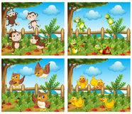 Scenes with animals in the farmyard Stock Image