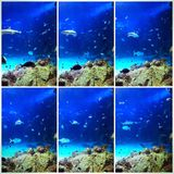 Scenes from an aquarium Royalty Free Stock Photography