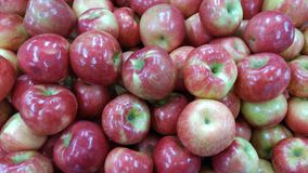 Scenes from Autumn in Ohio: Apples. Autumn, interchangeably known as fall in North America, [1] is one of the four temperate seasons. Autumn marks the transition stock image