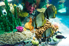 Scenes of the coral reef Stock Photo