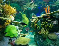 Scenes of the coral reef Royalty Free Stock Photography
