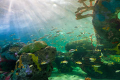 Scenes of the coral reef Royalty Free Stock Image