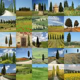 Scenes with cypresses Royalty Free Stock Photography