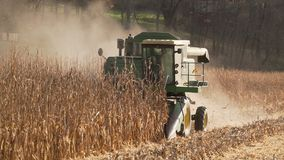 Scenes of harvesting corn. Harvesting corn in a field. A combine harvesting corn stock footage