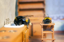 Scenes from the life of bumblebee family. Royalty Free Stock Photos