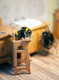 Scenes from the life of bumblebee family. Royalty Free Stock Photo