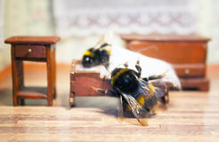 Scenes from the life of bumblebee family. Stock Photo