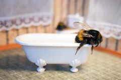 Scenes from the life of bumblebee family. Stock Images