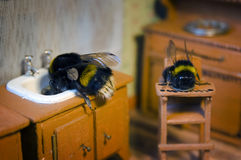 Scenes from the life of bumblebee family. Royalty Free Stock Photography