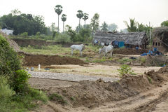 Scenes of rural life in India Royalty Free Stock Photography