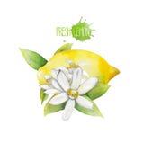 Scenetta del limone dell'acquerello Immagini Stock Libere da Diritti