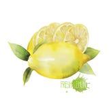 Scenetta del limone dell'acquerello Fotografia Stock