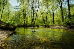 Scenic. Spring in the forest by a river with stones in the water Stock Photo