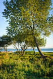 Scenic Aarhus Bay, Denmark. A view over the Aarhus Bay in central Denmark - the leaves glow in the setting sun royalty free stock photo