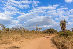 Scenic African Wilderness Wildlife Landscape Stock Images