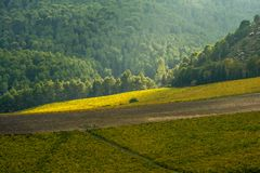 Scenic agricultural landscape of Sicily island Royalty Free Stock Photo
