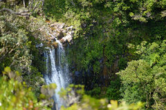 Scenic Alexandra falls in jungle of Mauritius Stock Images