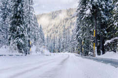 Scenic Alpine Road through a Forest Royalty Free Stock Photography