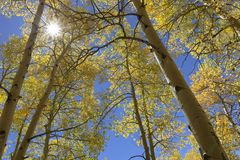 Scenic Aspen View of Sky Sun Bust stock photography