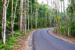 Scenic Asphalt Concrete Road through Dense Forest and Greenery in an Indian Village. This is a photograph of a scenic asphalt concrete road through dense forest stock photography