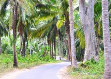 Scenic Asphalt Concrete Road through Palm Trees, Coconut Trees, and Greenery - Neil Island, Andaman, India. This is a photograph of a scenic asphalt concrete royalty free stock images