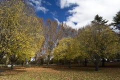 Scenic Autumn in Australia Stock Images