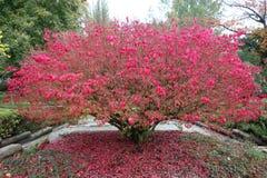 Scenic autumn. Stock Image