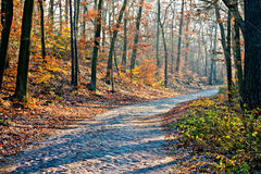 Scenic autumn forest road at sunny day Stock Images