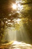 Scenic autumn forest road at sunrise Stock Image