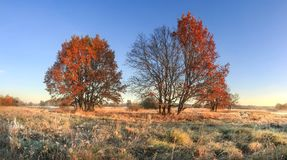 Scenic autumn landscape of colorful nature on october meadow with trees. Red foliage on tree and hoarfrost on grass. Fall. Amazing autumn in clear morning stock images