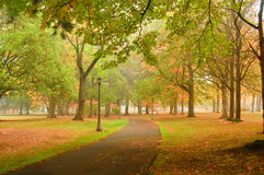 Scenic Autumn Park. Park in fall with fog in background and fallen leaves stock image