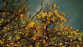 Scenic Autumn Tree stock video