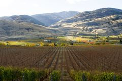 Oliver Okanagan Valley Vineyard British Columbia. Scenic autumn view of the rural landscape and vineyards of Oliver located in the Okanagan Valley of British Royalty Free Stock Images